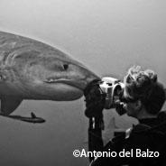 La passione per i giganti del mare